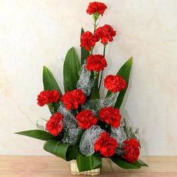 Classic One Dozen Carnations Celebration Bouquet