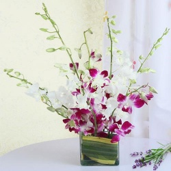 Lovely Orchids in Vase