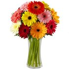 Clustered Presentation of Mixed Gerberas in a Glass Vase