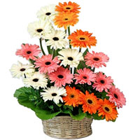 Remarkable Mixed Gerberas Arrangement