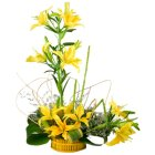 Extravagant Cluster of 6 Stemmed Yellow Lilies