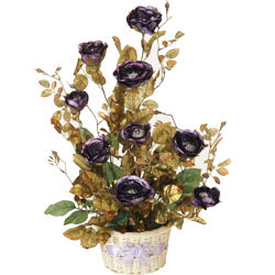 Long Lasting � Purple Rose Plant