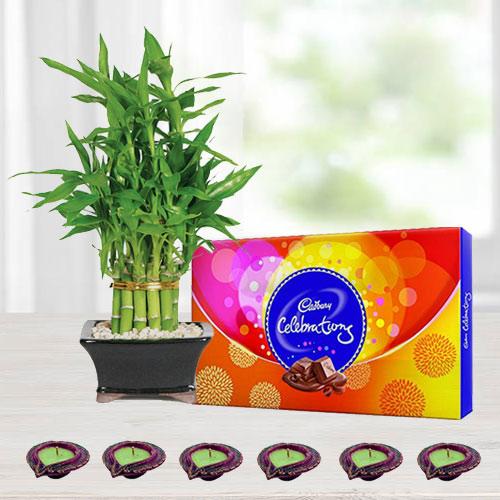 2 Tier Lucky Bamboo Plant with Cadbury Celebrations