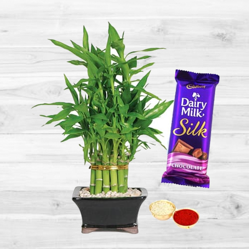 2 Tier Bamboo Plant N Silk Chocolates
