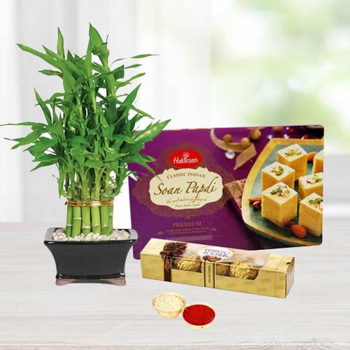 Bamboo Plant with Soan Papdi N Ferrero Rocher Chocolates