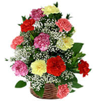 Deliver Basket of Assorted Carnation Online
