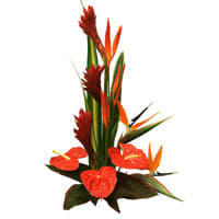 Order Birds of Paradise N Anthuriums Arrangement Online