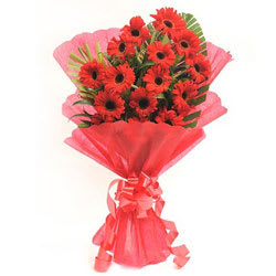 Magnificent Bunch of Gerberas in Red Colour