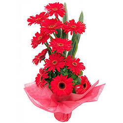 Online Assemble of Red Gerberas