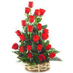 Brilliant Selection of Red Roses