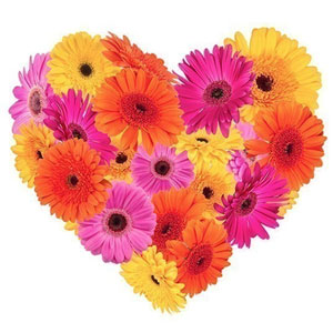 Joyful Emotions Gerberas Premium Heart Shaped Arrangement
