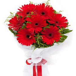 Send Red Gerberas Bouquet Online