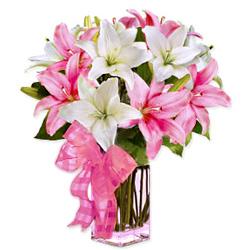 Buy Pink n White Lilies Online