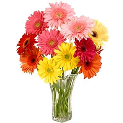 Expressive Multi-Colored Gerberas in a Glass Vase